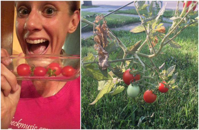 My Life as a Tomato Farmer and What It's Teaching Me About Jesus